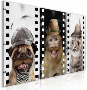 Πίνακας - Funny Pets (Collection) - 120x60