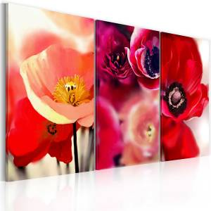 Πίνακας - Poppies - three perspectives - 60x40